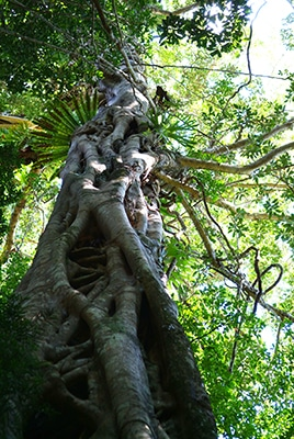 Rainforest tree - chlorophyll magnesium